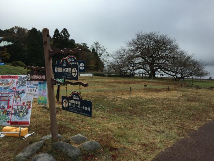 箱根旅行 箱根園 紅葉 芦ノ湖 観光 箱根園水族館 一本桜