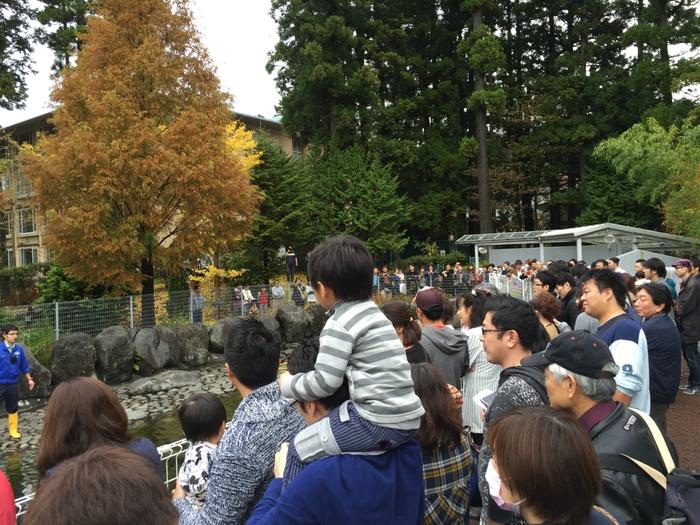 箱根園水族館  あざらしショー 箱根園 箱根 旅行 おすすめ 水族館 紅葉 旅行