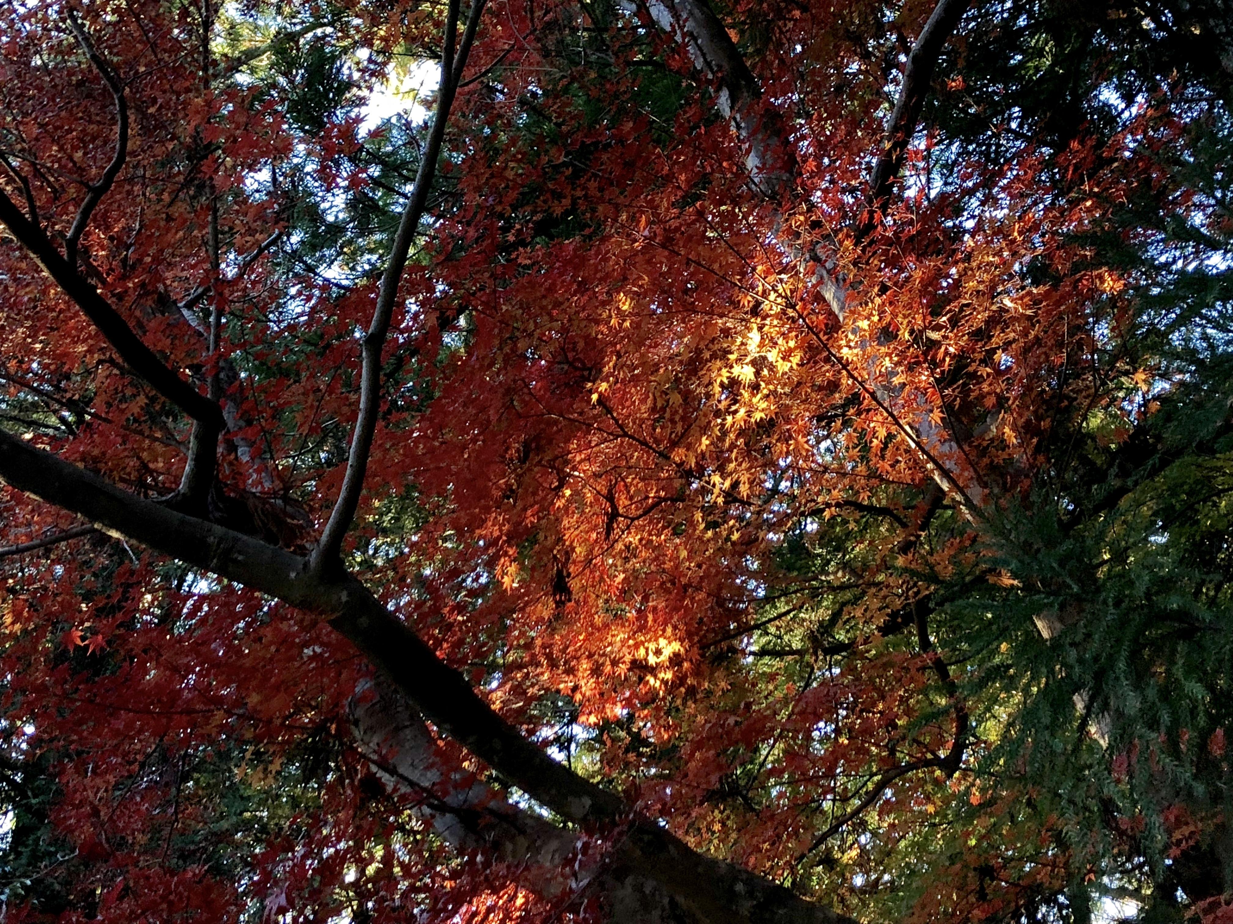 小国神社 紅葉