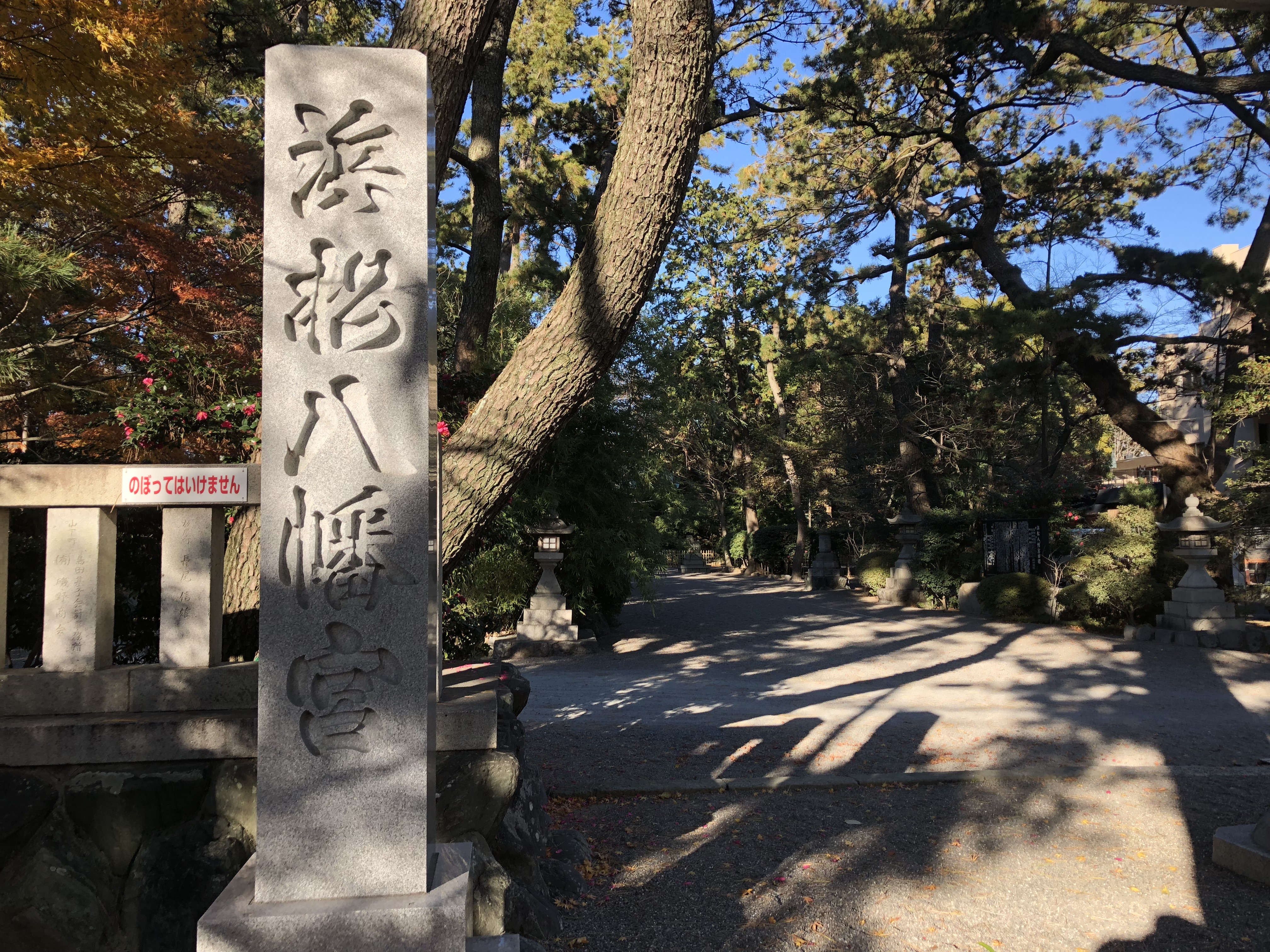 浜松八幡宮 雲立のクス 巨木