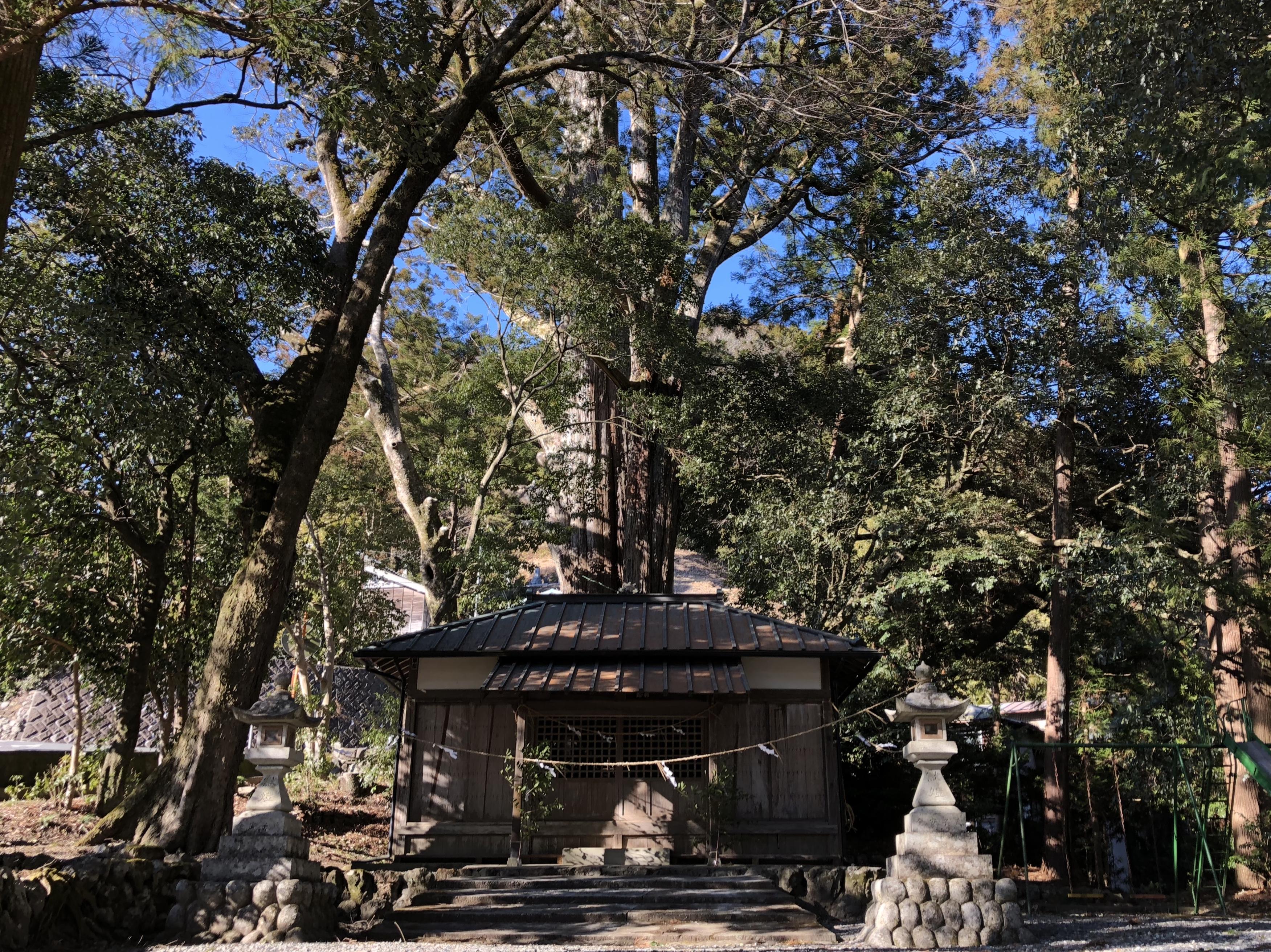 武速神社 将軍スギ 浜松 巨木 パワースポット