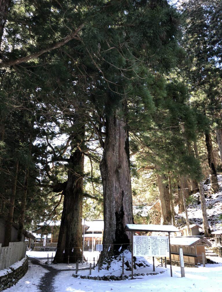 山住神社 水窪 浜松市 パワースポット 巨木