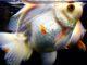 【水中楽園】Aquarium-アクアリウム- 静岡県に新しいお出かけ&デートスポット誕生